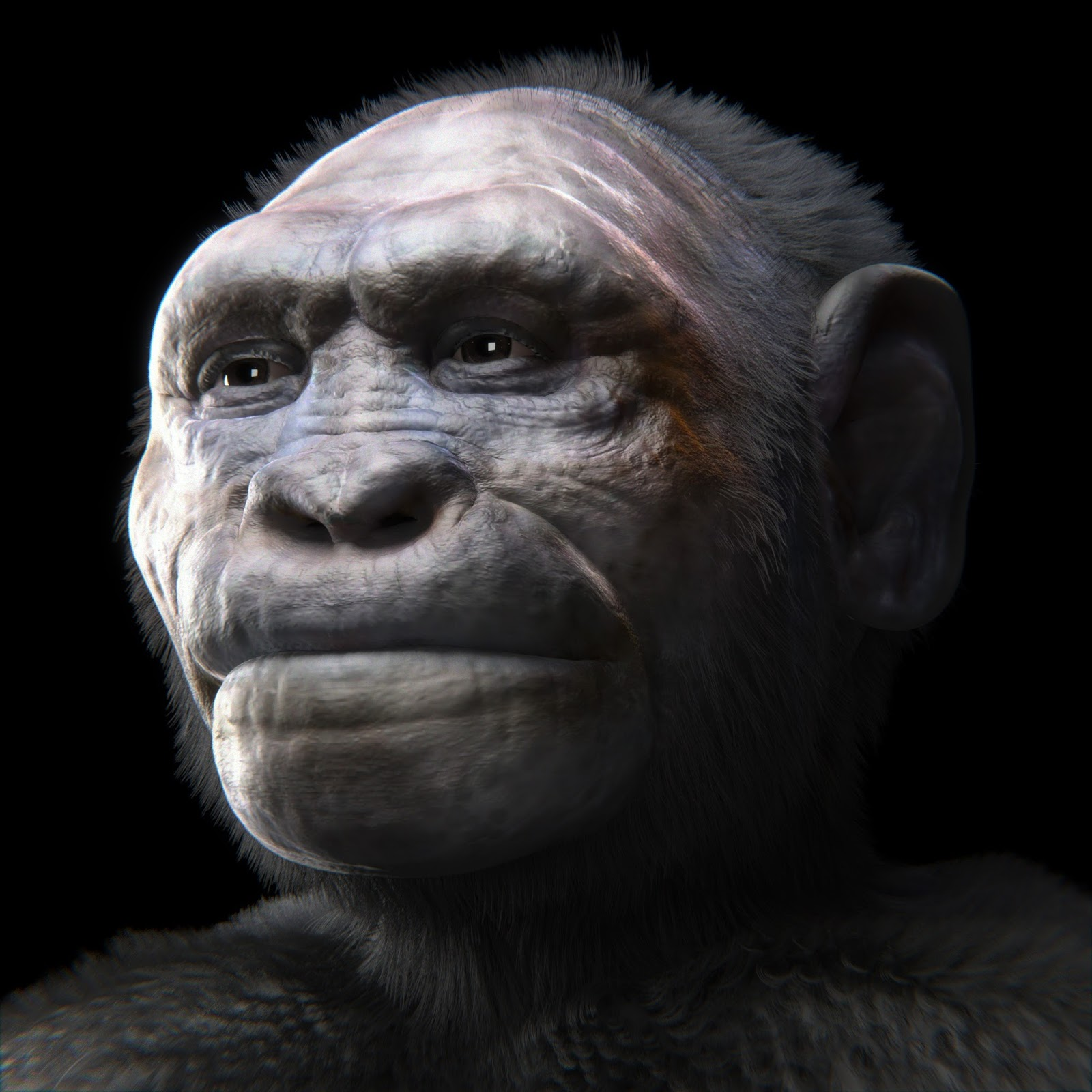 Top 7 Extinct Human Species | Brain Berries