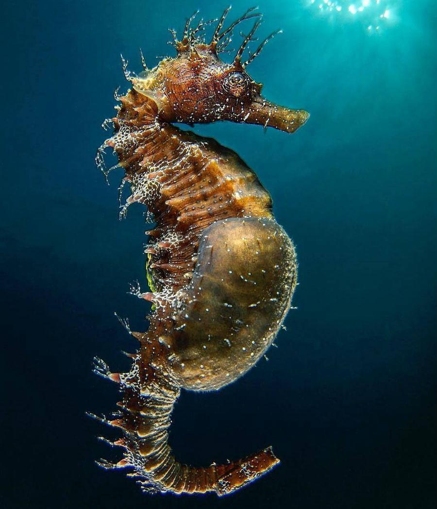 верхней обитатели глубин океана фото народные рецепты, аптечные