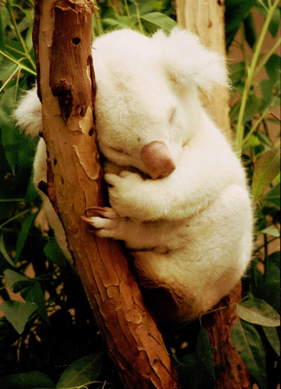 10 Amazingly Cute Albino Animals | Brain Berries