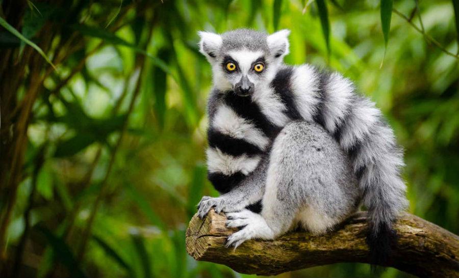 Мадагаскар  | 10 популярных туристических мест, которые скоро могут исчезнуть | BrainBerries