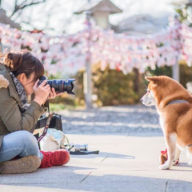 The Happiest Shiba Inu On Instagram #18 | Brain Berries