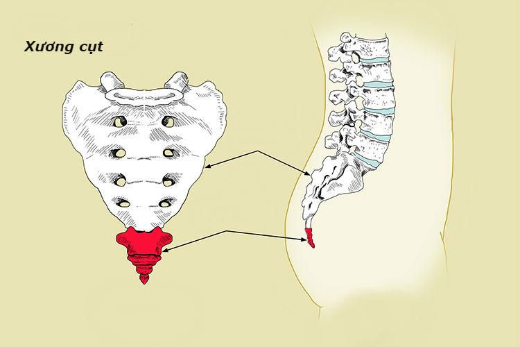 Xương cụt  | 9 Bộ phận cơ thể không thực sự cần thiết | BrainBerries
