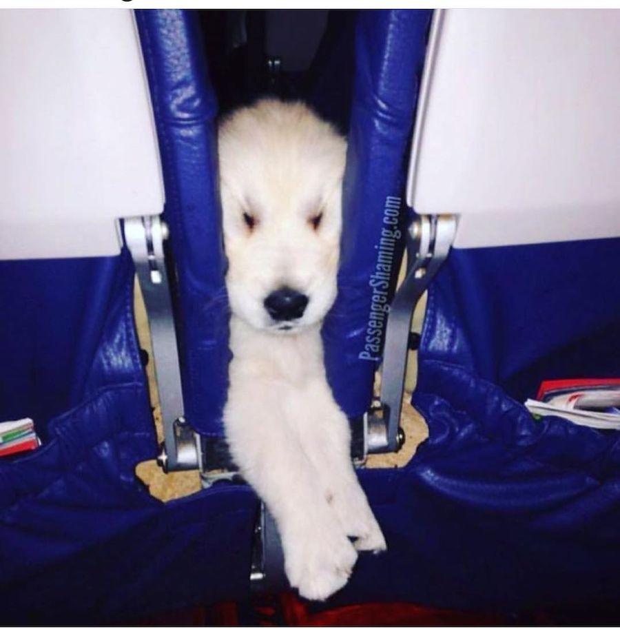 Passenger Shaming | dog | ZestRadar