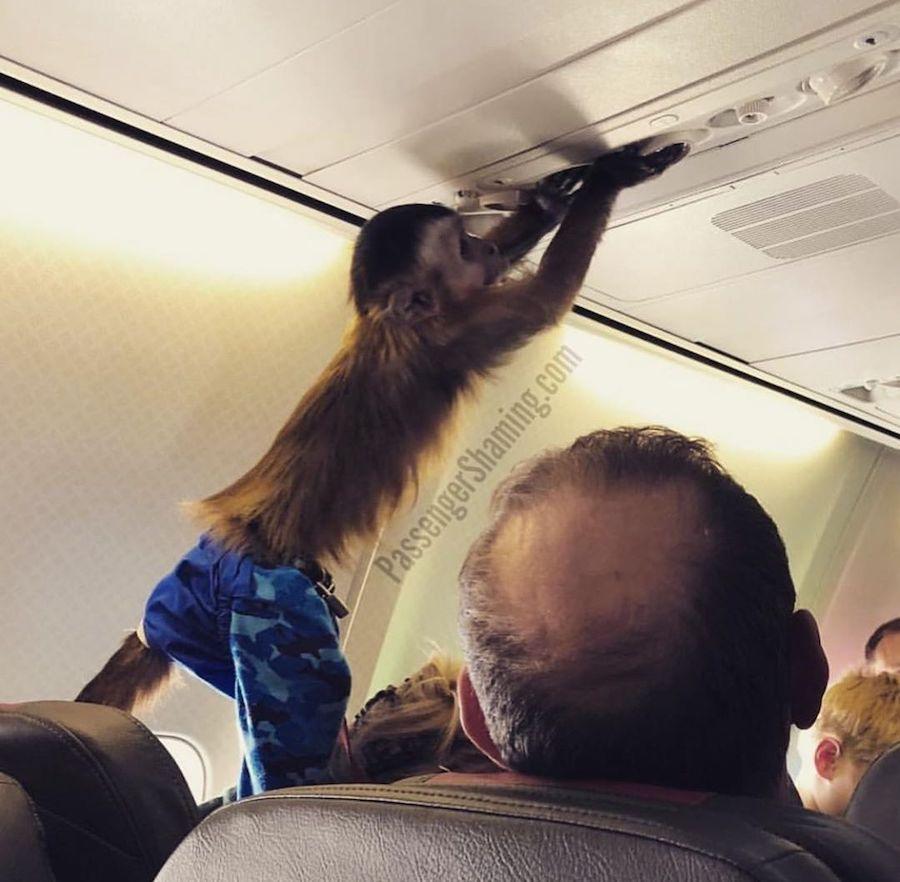 Passenger Shaming | monkey | ZestRadar