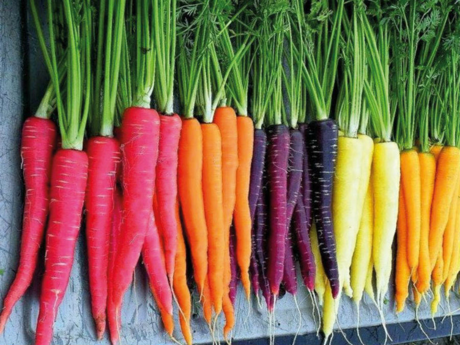 Eyesight and Carrots | 6 Ridiculous Health Myths That Are Actually True | Brain Berries