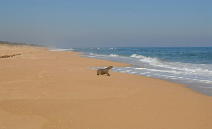 90-мильный пляж, Австралия   10 самых длинных пляжей мира   ZestRadar
