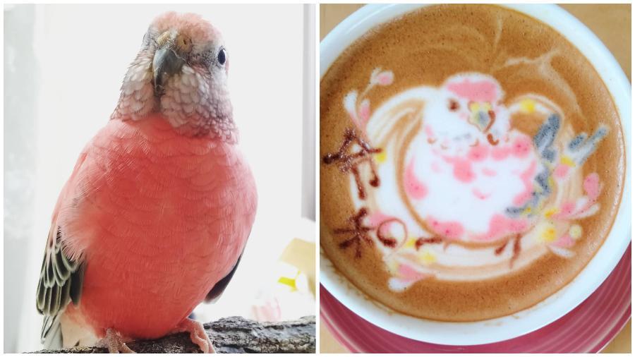 Bird Latte Art #1 | Zestradar