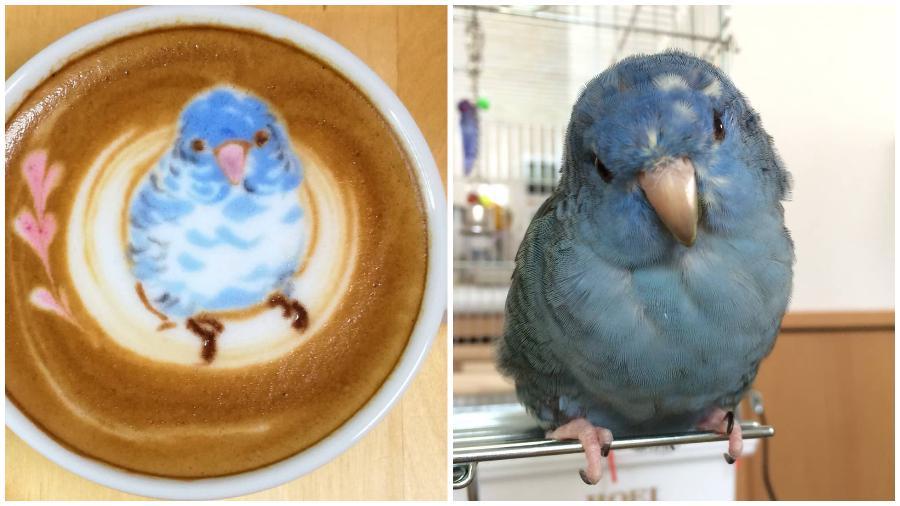 Bird Latte Art #6 | Zestradar