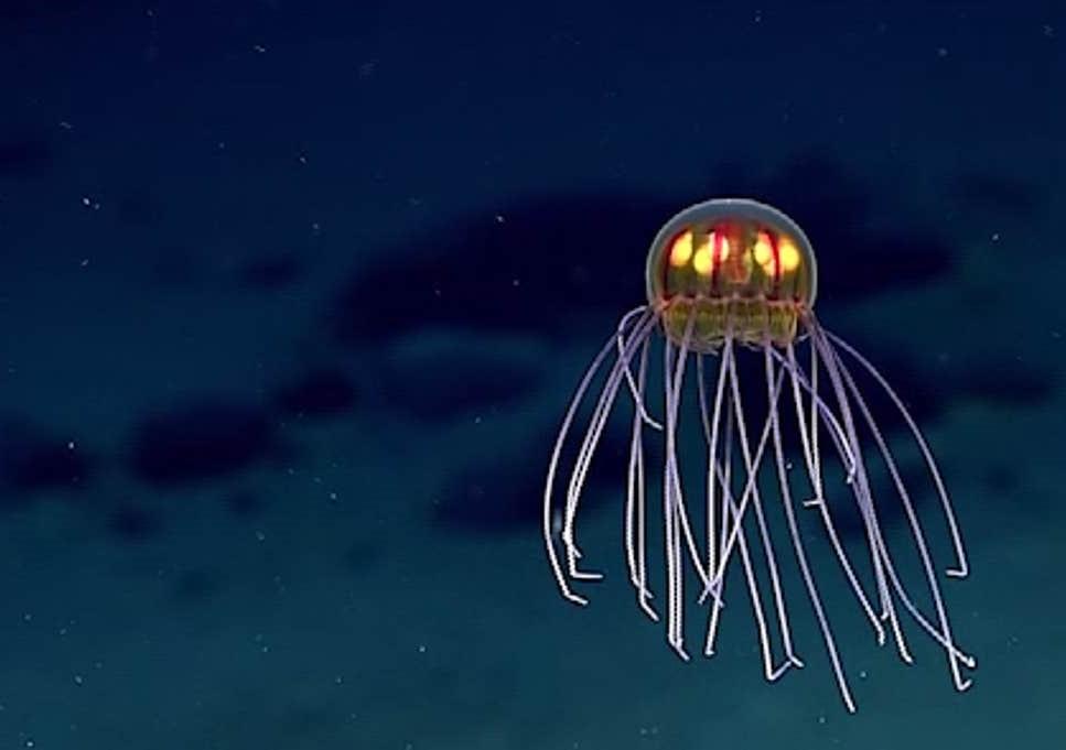 Светящаяся шарообразная медуза | 10 самых необычных обитателей Марианской впадины | Brain Berries