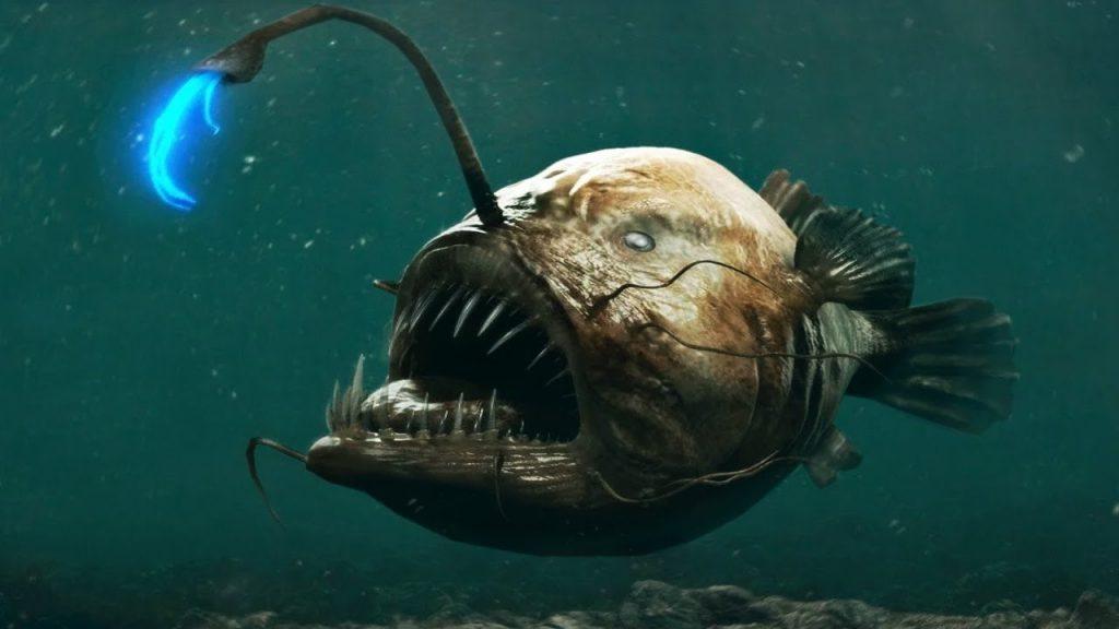 Глубоководный удильщик или морской черт | 10 самых необычных обитателей Марианской впадины | Brain Berries