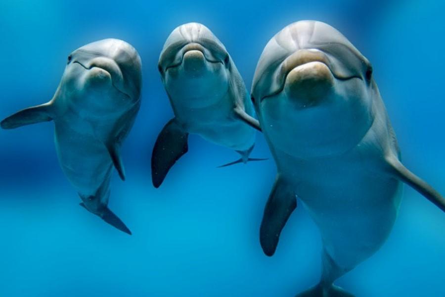Циничные и жестокие: 6 неприятных фактов дельфинах   Brain Berries