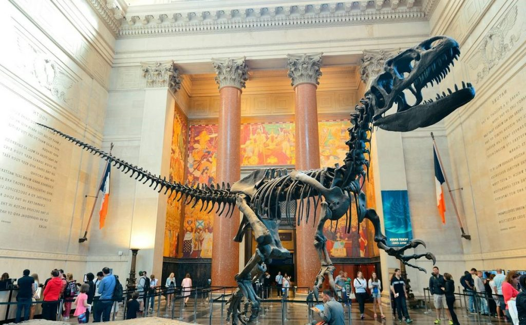 American Museum of Natural History (New York) inside | 6 Best Natural History Museums In The World | Brain Berries