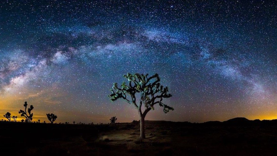 Joshua Tree | Contemplate Life at These 10 Stargazing Locations | Brain Berries
