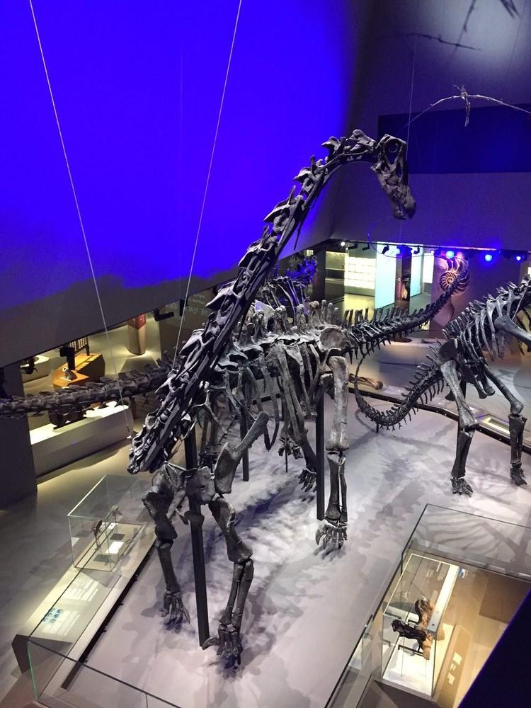 Lee Kon Chian Natural History Museum (Singapore) inside| 6 Best Natural History Museums In The World | Brain Berries