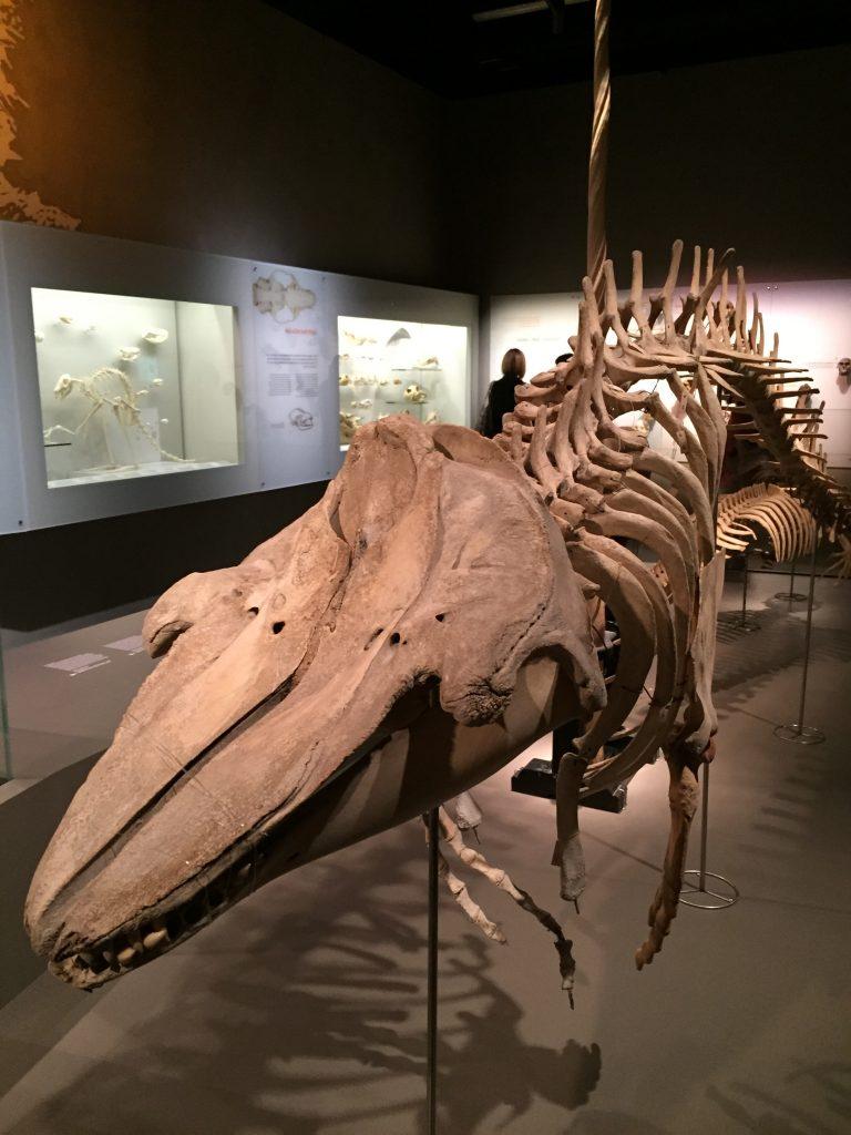 Lee Kon Chian Natural History Museum (Singapore) inside #2 | 6 Best Natural History Museums In The World | Brain Berries| 6 Best Natural History Museums In The World | Brain Berries