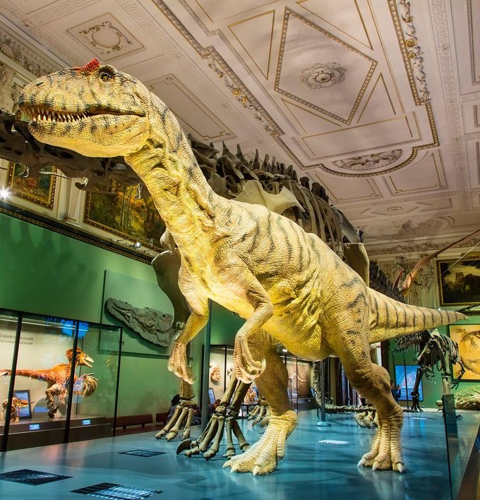 Natural History Museum (Vienna) inside | 6 Best Natural History Museums In The World | Brain Berries