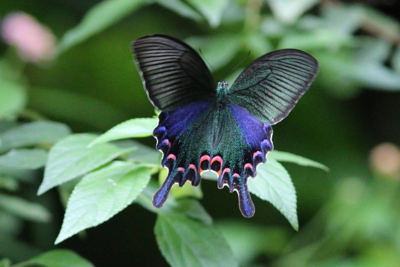 The 7 Most Beautiful Butterflies In The World | Her Beauty