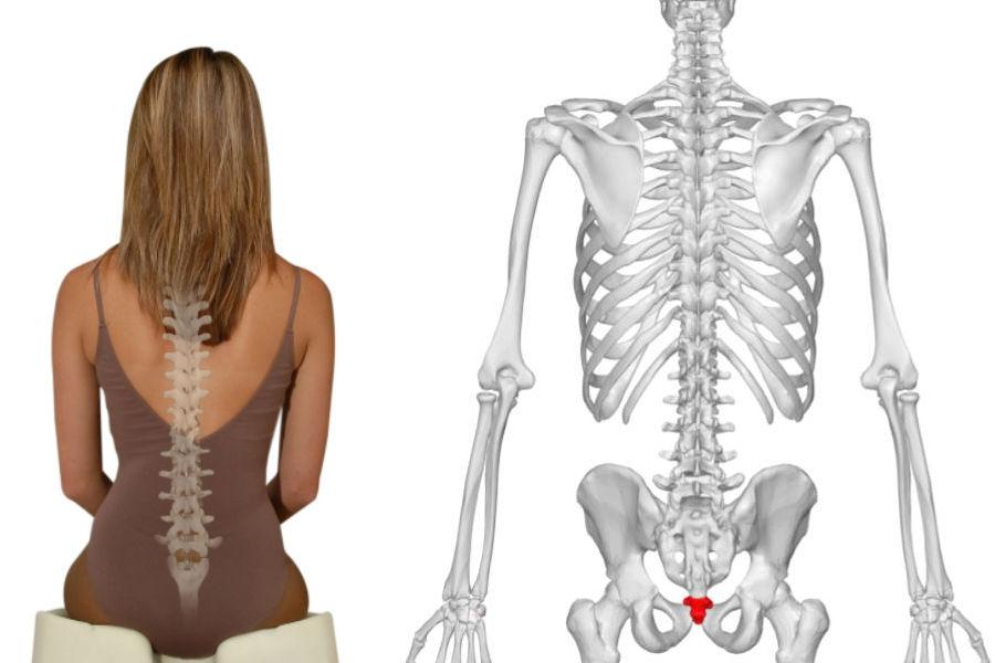 Coxis | 9 Partes Del Cuerpo Que Los Humanos Realmente No Necesitan | Brain Berries