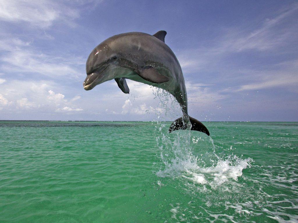 Они не спасают людей   Циничные и жестокие: 6 неприятных фактов дельфинах   Brain Berries