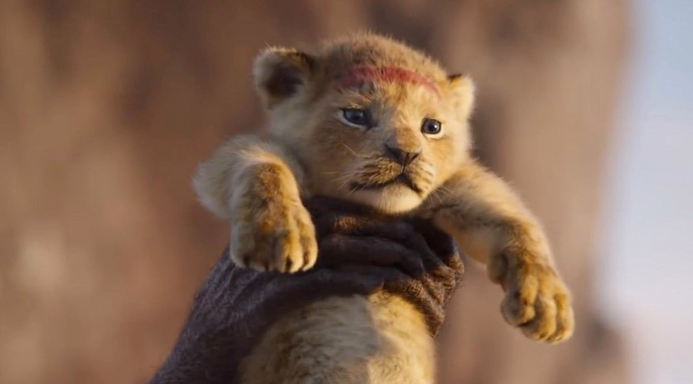 lion cub Bahati | Disney's Live-Action Simba Was Based on the Cutest Lion Cub Ever! | Brain berries