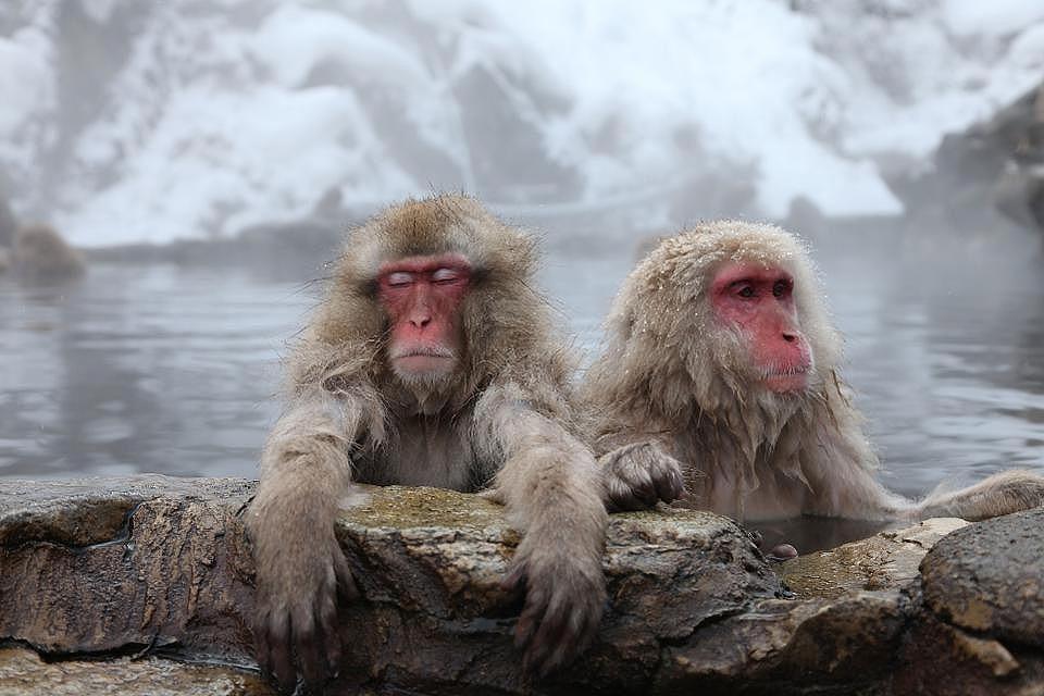 Обезьяний парк Иватаяма | Киото – город, который стоит посетить хотя бы раз | Brain Berries