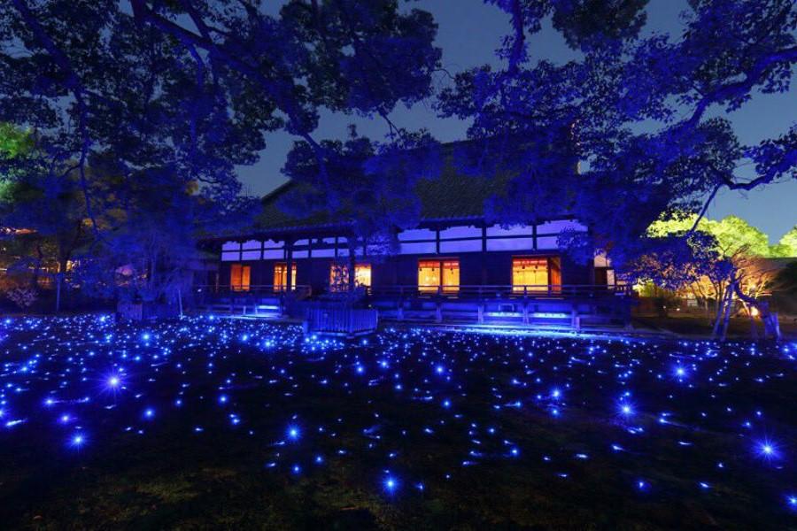 Фестиваль цветов и света Ханаторо | Киото – город, который стоит посетить хотя бы раз | Brain Berries