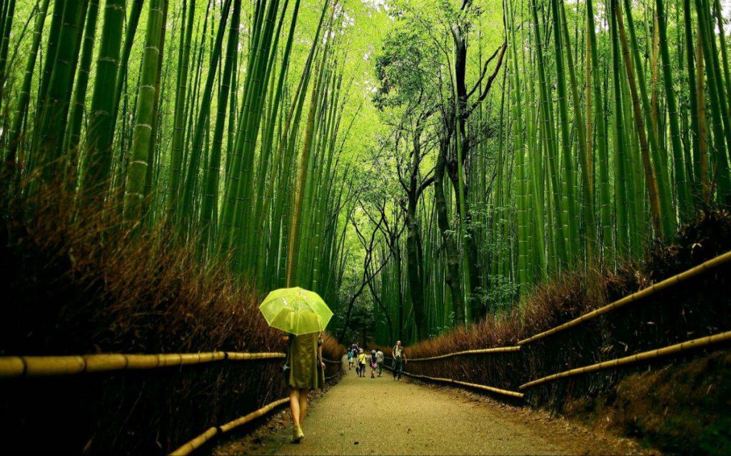 Бамбуковая роща Сагано | Киото – город, который стоит посетить хотя бы раз | Brain Berries
