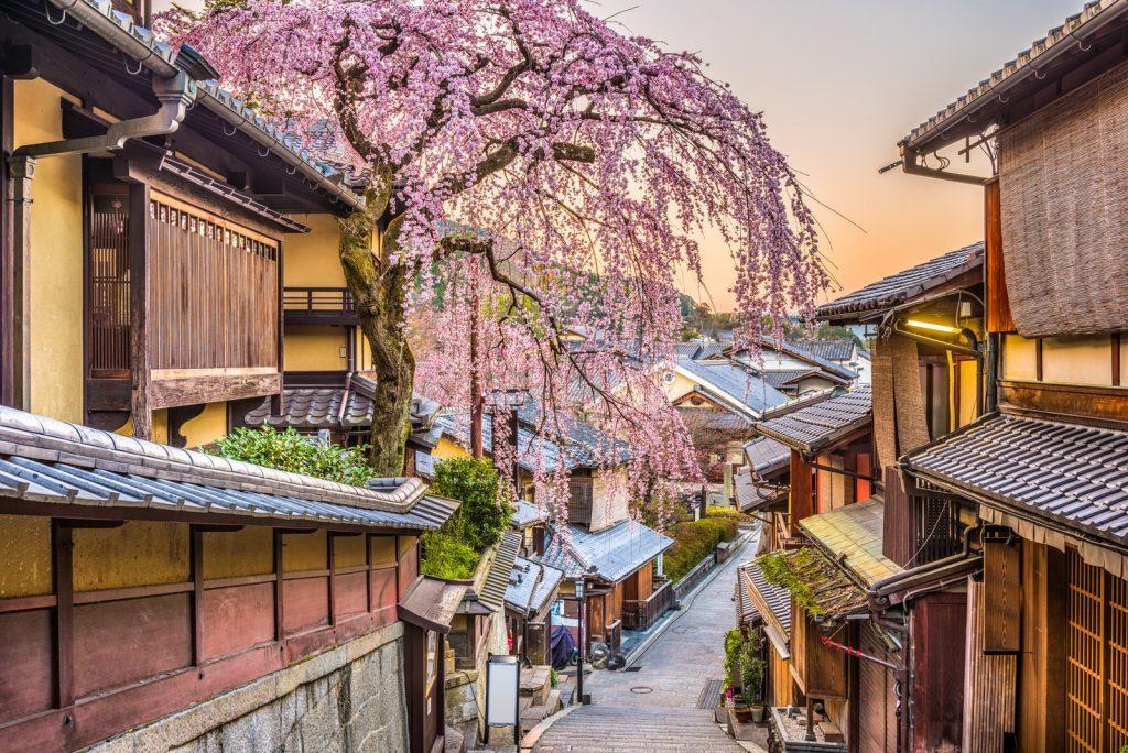Цветение сакуры | Киото – город, который стоит посетить хотя бы раз | Brain Berries