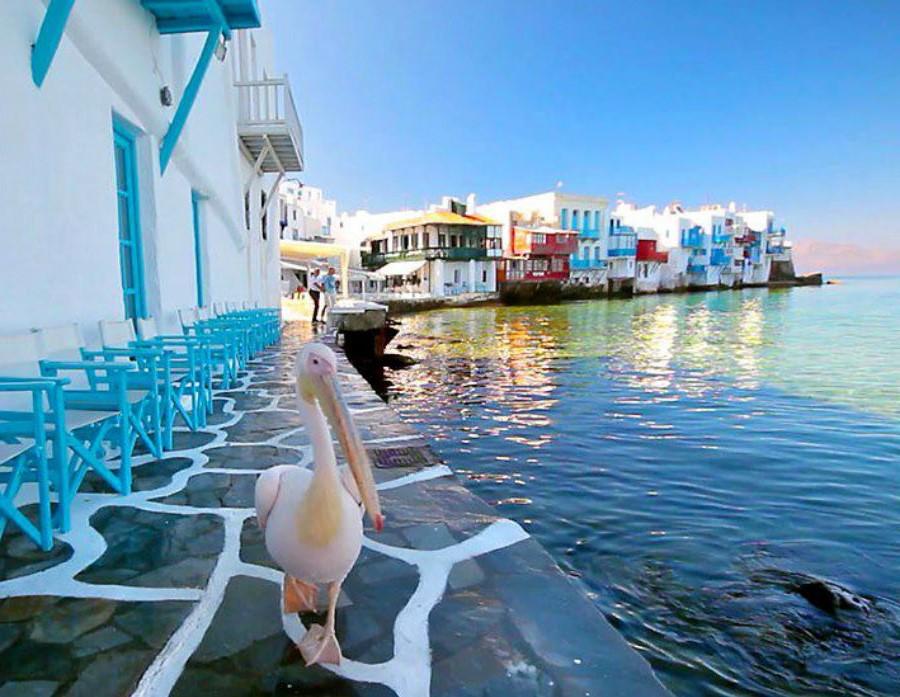 Миконос | Не только Санторини: 10 самых красивых островов Греции | Brain Berries