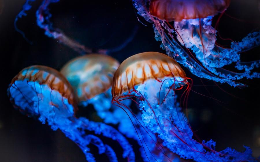 Медуза Пелагия | Топ-10 самых больших медуз в мире | ZestRadar