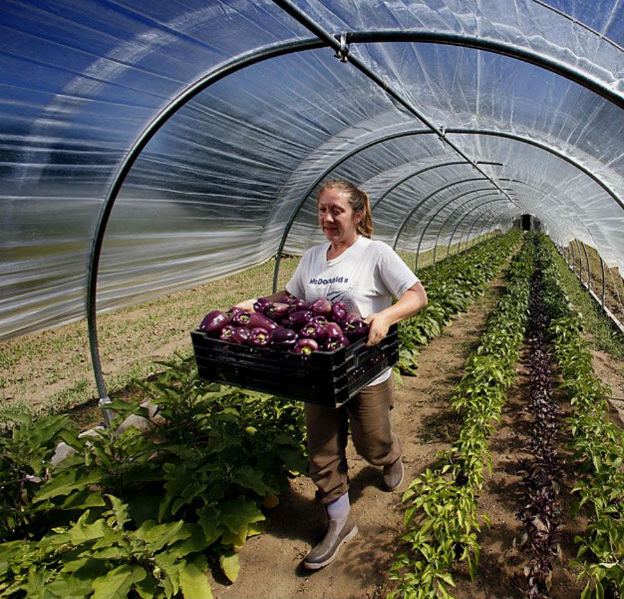 Работники сельского хозяйства, лесничества и рыболовства | Топ-10: самые востребованные и невостребованные профессии в России | Brain Berries
