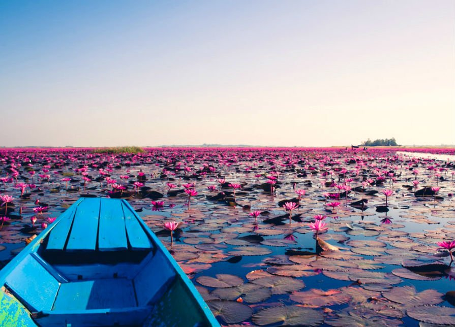 There's A Lake Of Pink Lotus Flowers In Thailand And It's Ridiculously Beautiful #1 | ZestRadar