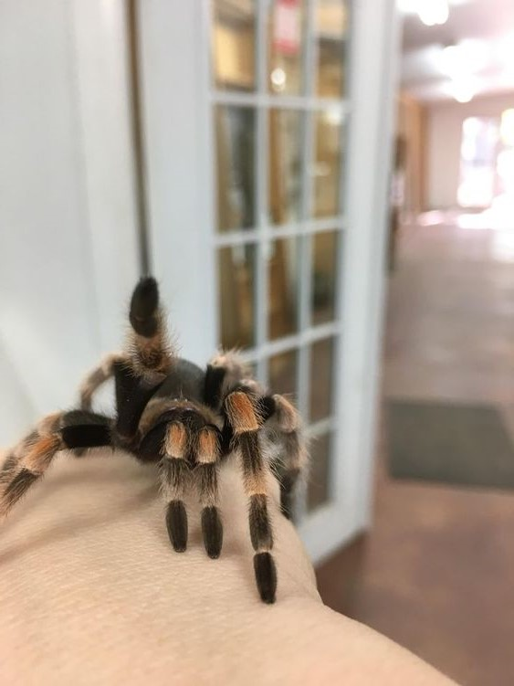 Scorpio (October 23 - November 21): Tarantula | What's The Perfect Pet For You, Based On Your Zodiac Sign? |