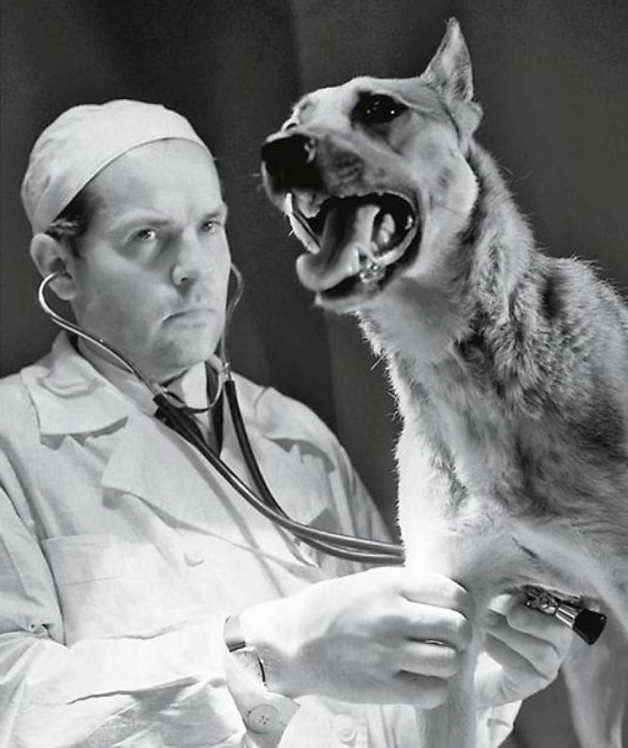 Владимир Демихов (1916-1998)   8 русских и советских врачей, изменивших мир в лучшую сторону   Brain Berries