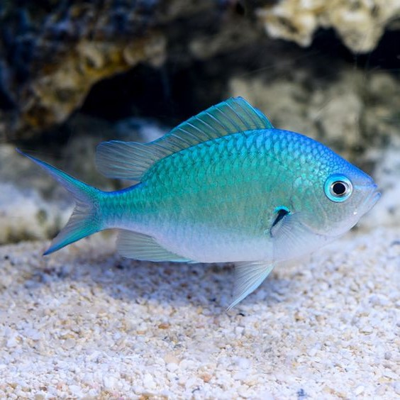 Taurus (April 20 - May 20): Exotic Fish | What's The Perfect Pet For You, Based On Your Zodiac Sign?
