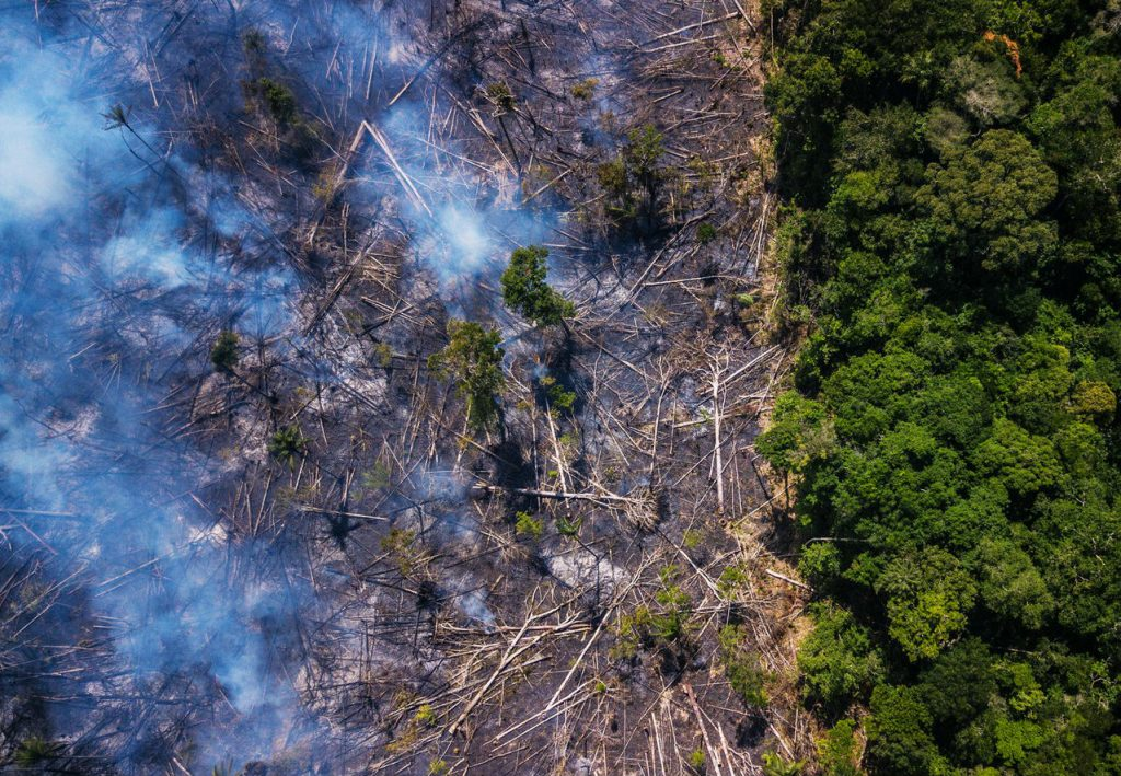 Forests are dying | 7 Global Problems That Are Destroying The Earth As We Speak | ZestRadar