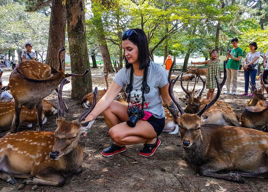 Нара – город Оленей | 10 причин посетить Японию | ZestRadar