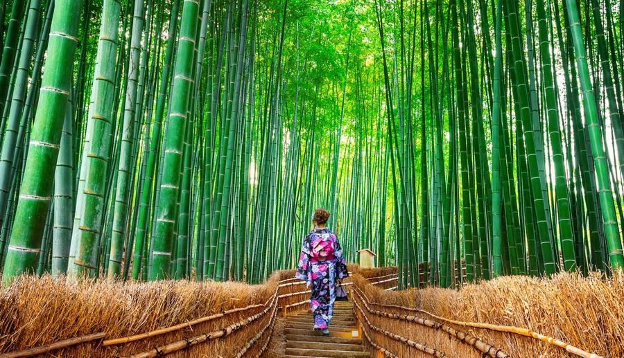 Бамбуковый лес Сагано  | 10 причин посетить Японию | ZestRadar