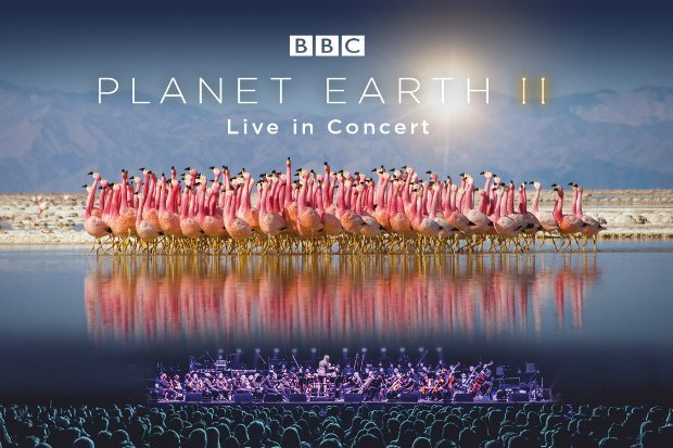 Planet Earth 2 | Netflix Documentaries You Should Definitely Watch | Brain Berries