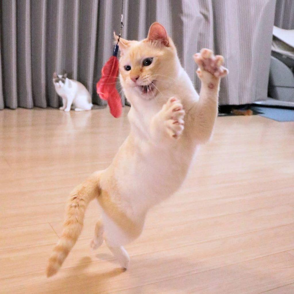 Japanese Dancing Cat #10 | Brain Berries
