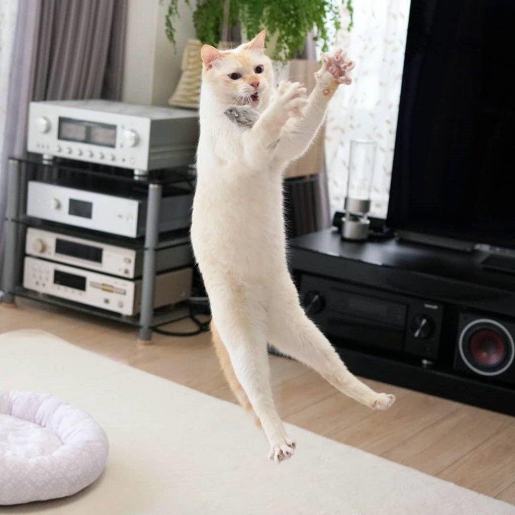 Japanese Dancing Cat #11 | Brain Berries