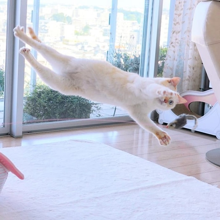 Japanese Dancing Cat #12 | Brain Berries