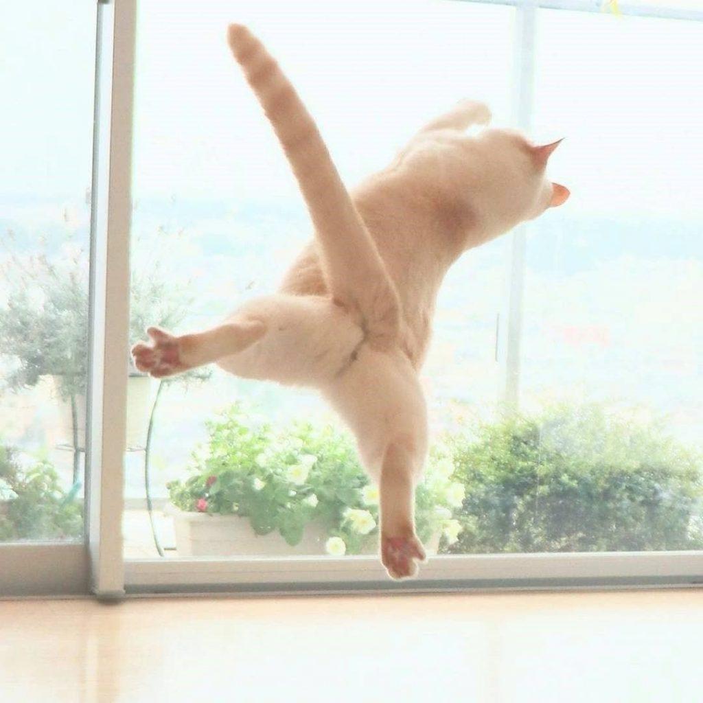 Japanese Dancing Cat #15 | Brain Berries
