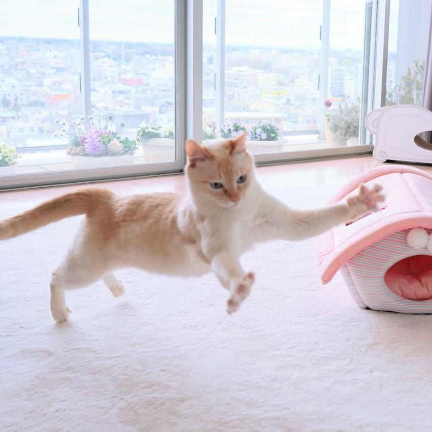 Japanese Dancing Cat #18 | Brain Berries
