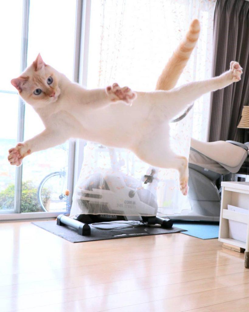 Japanese Dancing Cat #3 | Brain Berries