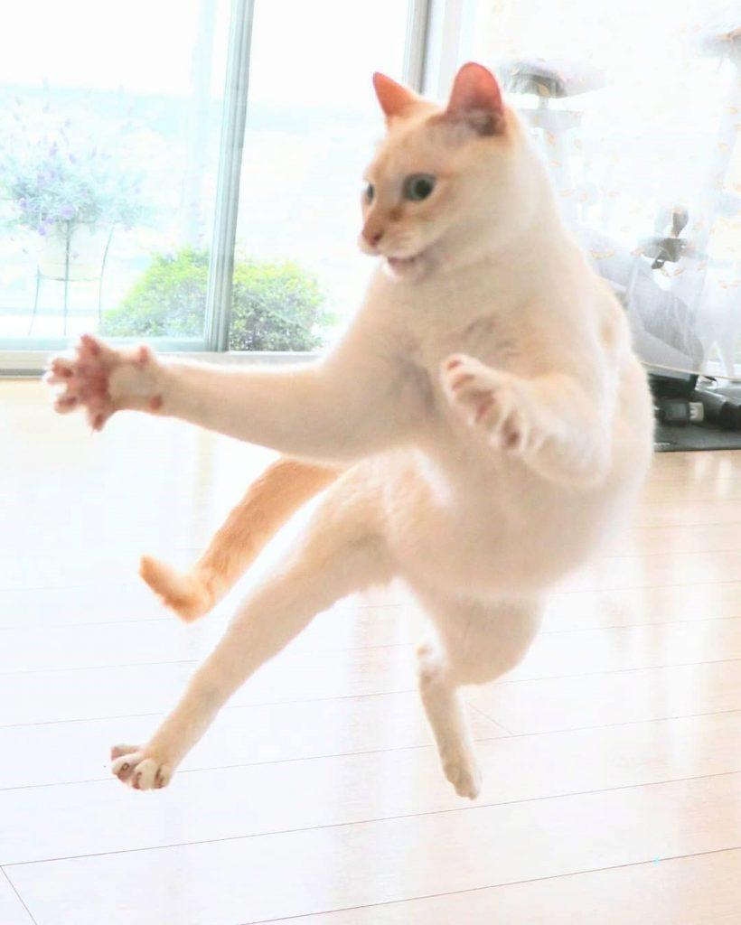 Japanese Dancing Cat #4 | Brain Berries