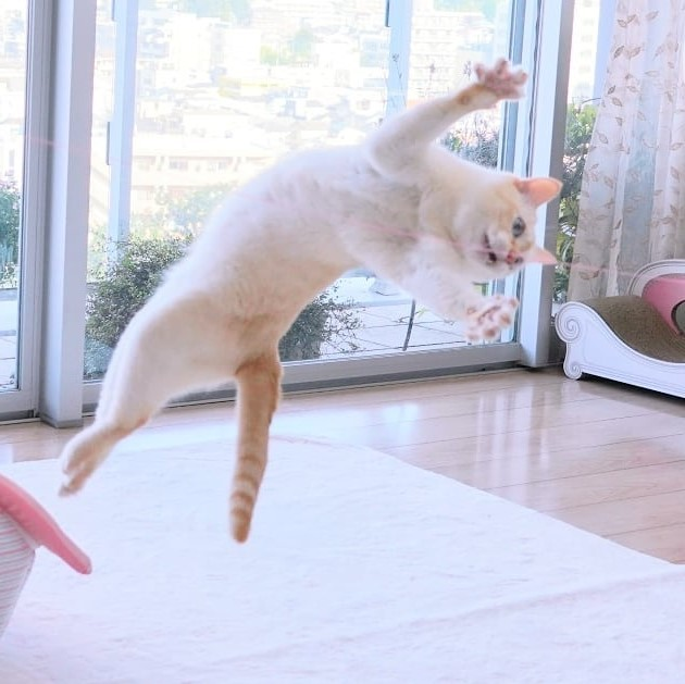 Japanese Dancing Cat #6 | Brain Berries