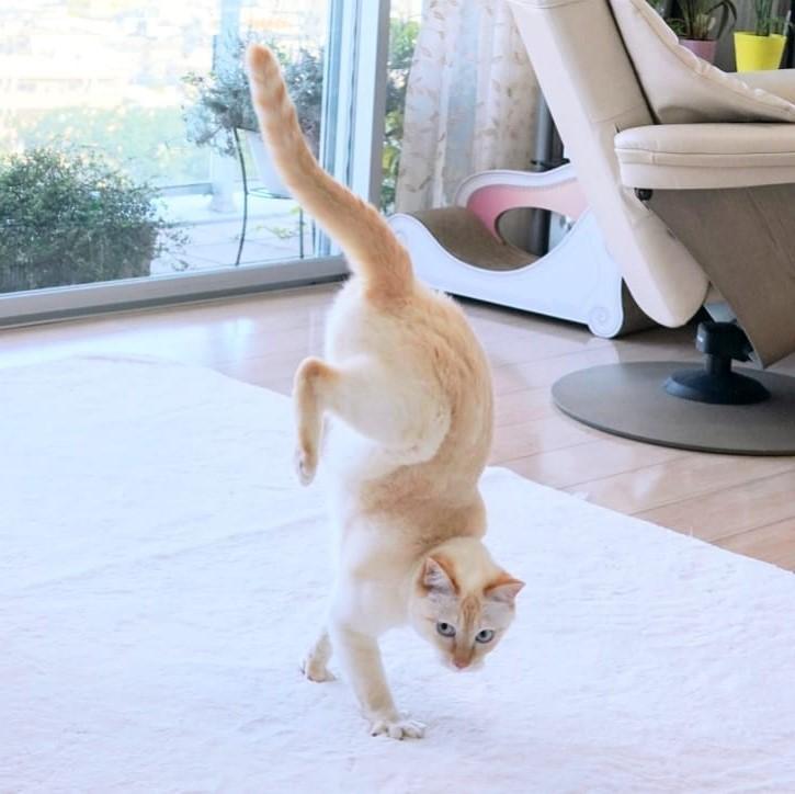 Japanese Dancing Cat #7 | Brain Berries