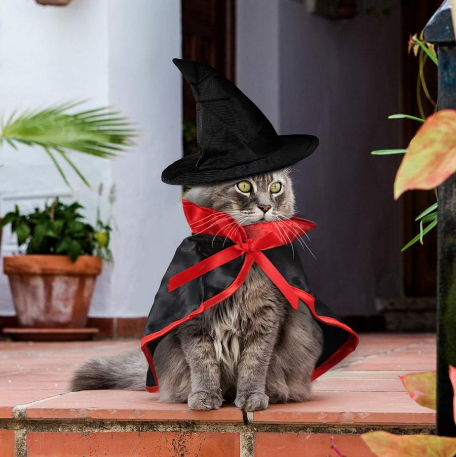 Самые забавные костюмы собак и котов на Хэллоуин #2 | ZestRadar