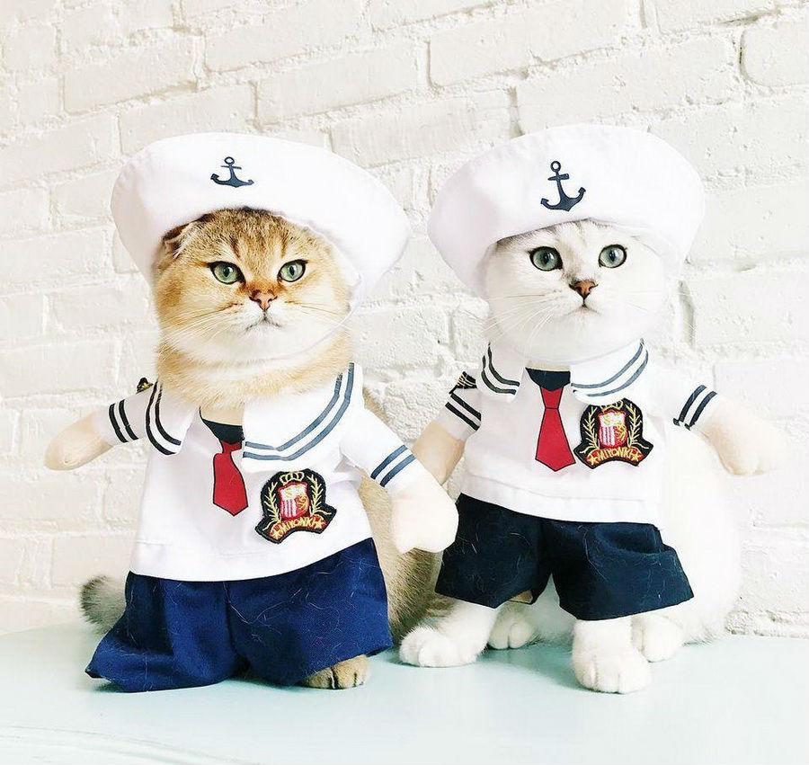 Самые забавные костюмы собак и котов на Хэллоуин #3 | ZestRadar